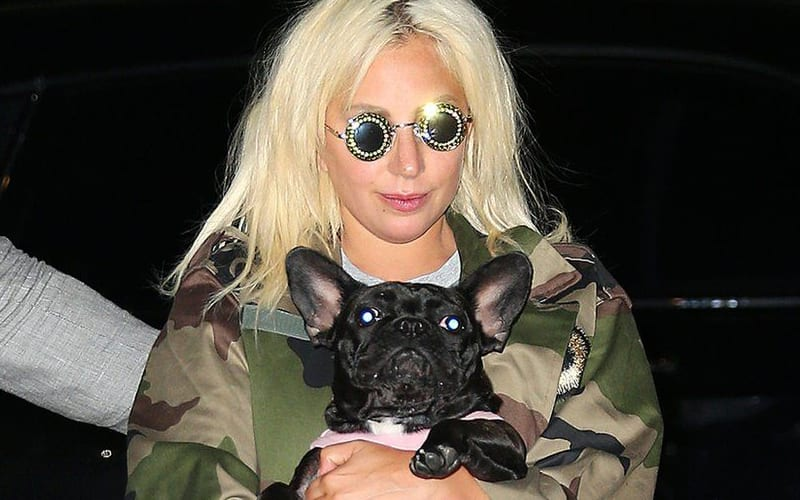 lady-gaga-949449-dog
