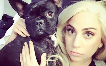 Lady Gaga's Dogs STOLEN After Dog Walker Was Shot