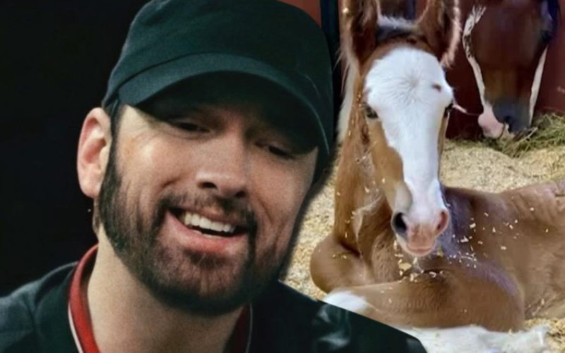 Eminem Gets His Own Budweiser Clydesdale Horse